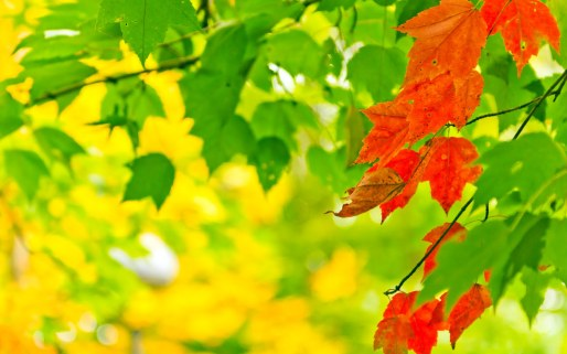 autumn-leaf-wallpaper-desktop